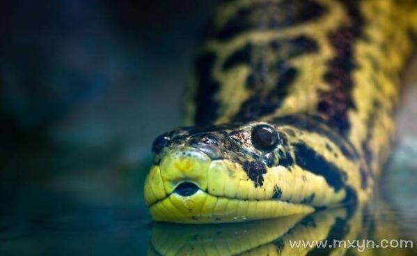 梦见蟒蛇吃人