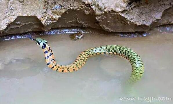 做梦梦见大蟒蛇