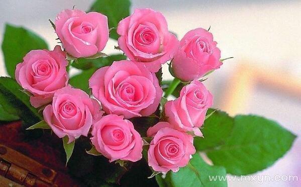 梦见玫瑰花