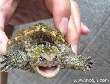 梦见乌龟咬人