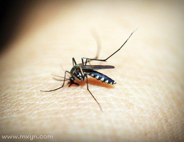梦见被蚊子咬