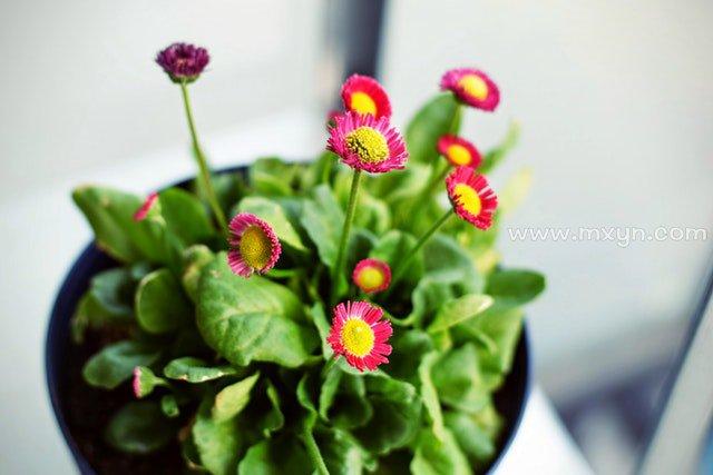 梦见盆栽植物