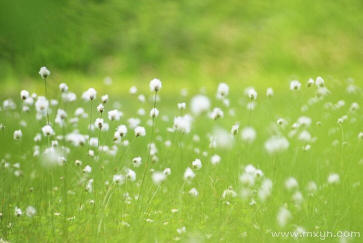 梦见白色的花