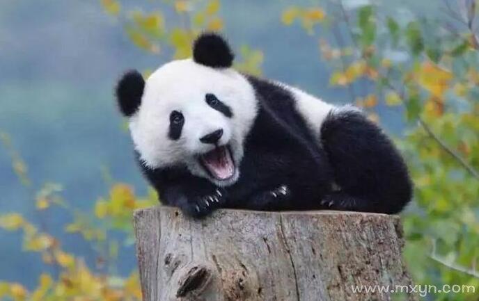 周公解梦梦见跳舞_梦见大熊猫 - 原版周公解梦大全