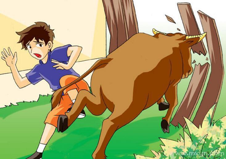 梦见被牛攻击