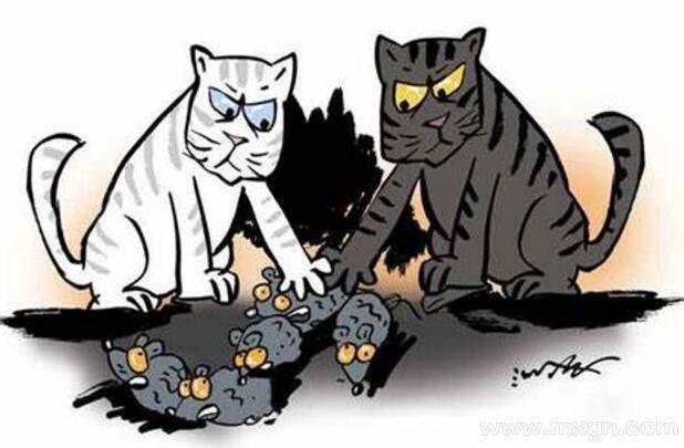 梦见猫捉老鼠