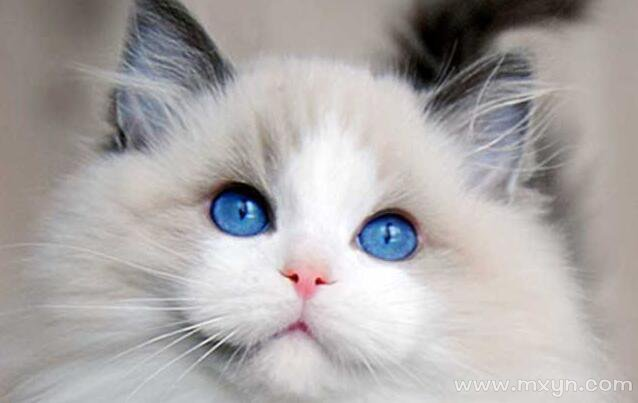 梦见一只猫
