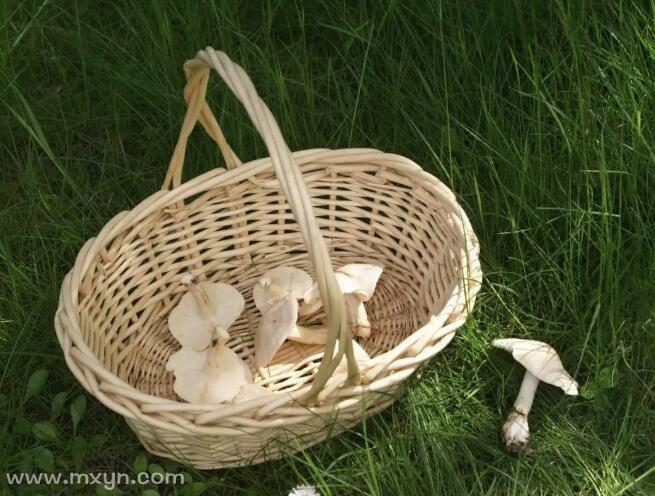 梦见捡蘑菇