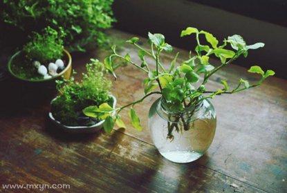 梦见绿色植物