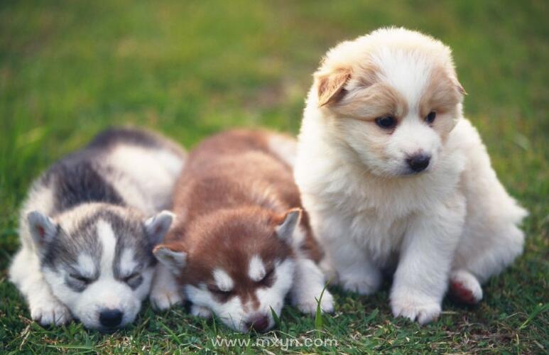 梦见三只狗