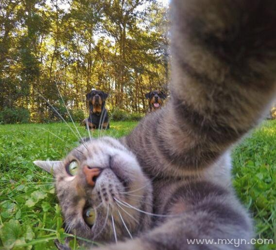 梦见猫缠着自己甩不掉
