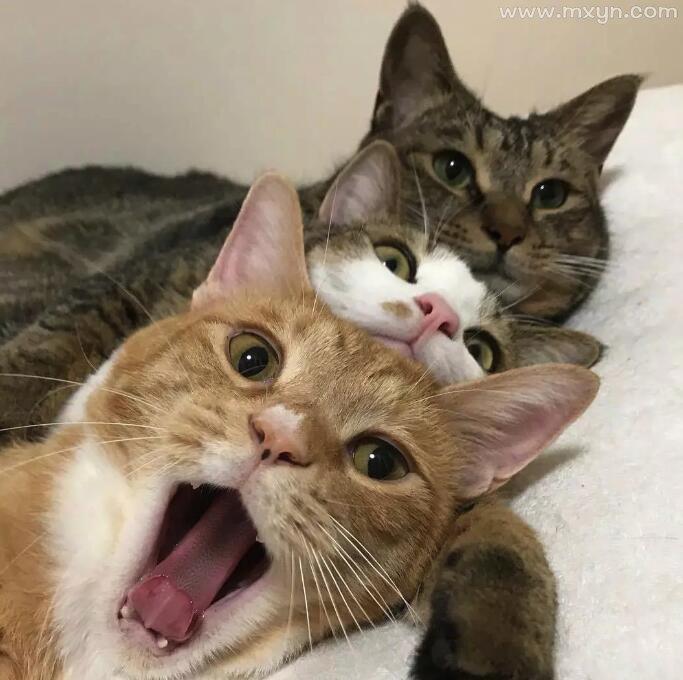 梦见三只猫