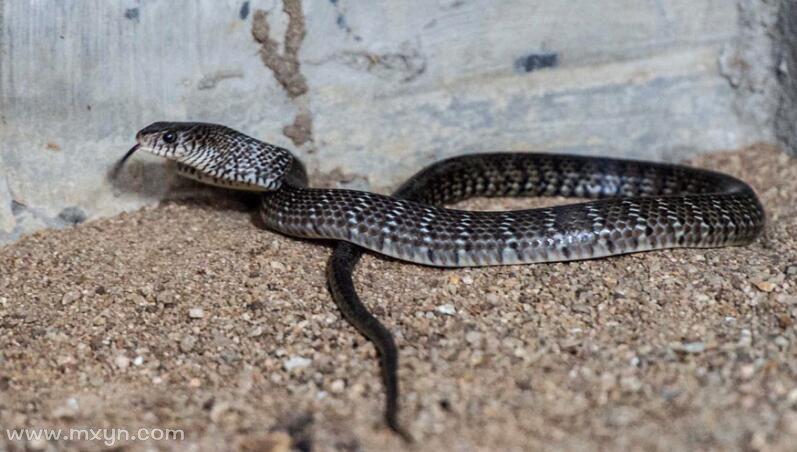 梦见蛇进家