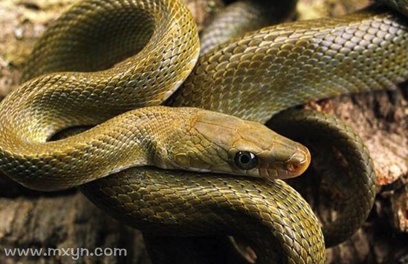 梦见路上好多蛇