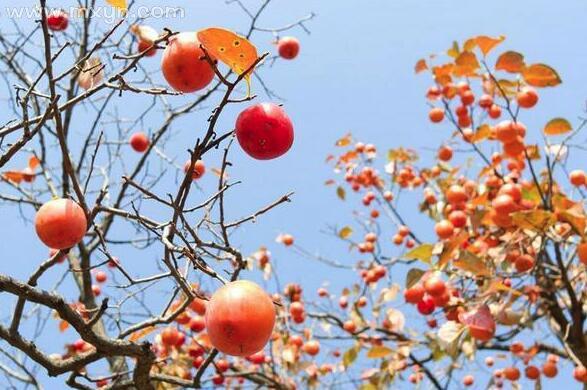 梦见树上结满果子