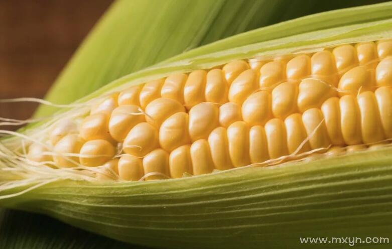 梦见买玉米