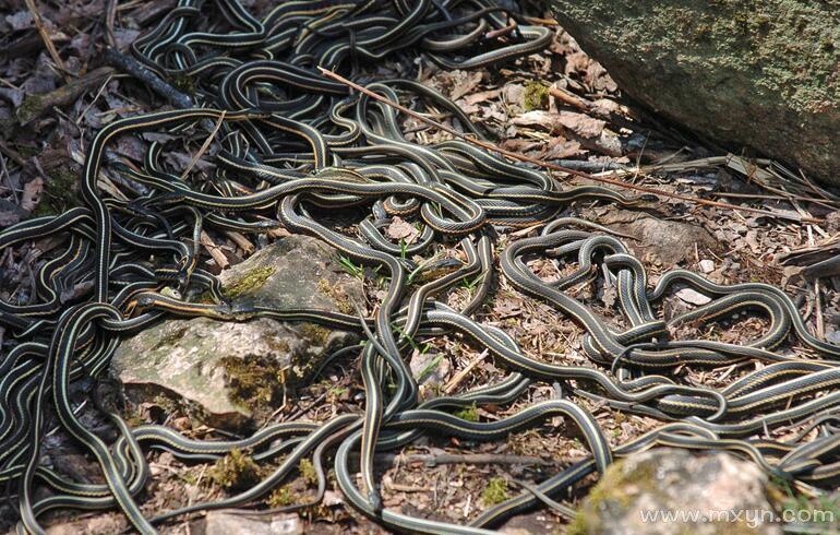 女人梦见满地都是蛇