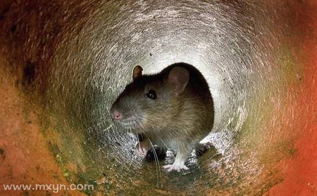 梦见打死老鼠