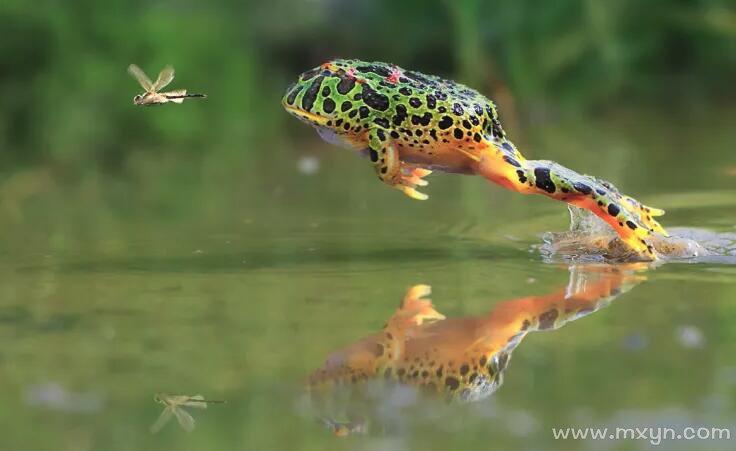 梦见青蛙跳到自己身上