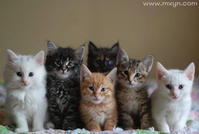 梦见好多猫