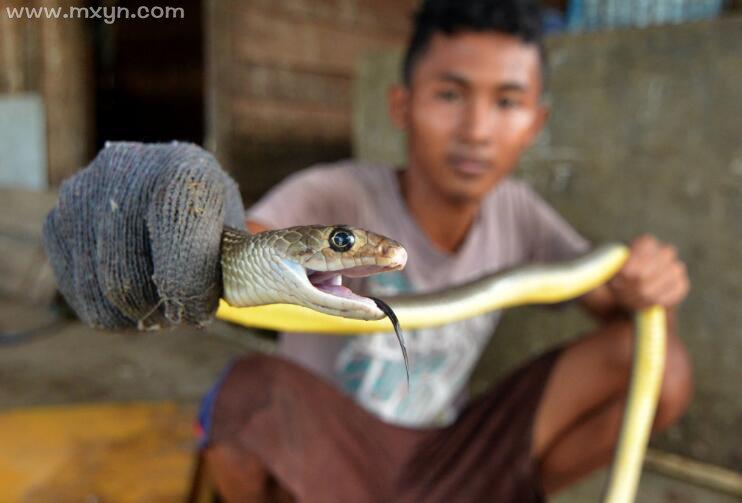 梦见杀死蛇