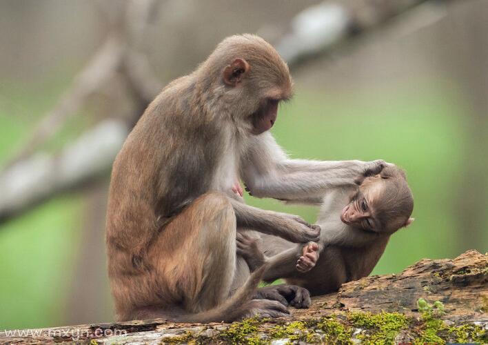 孕妇梦见猴子