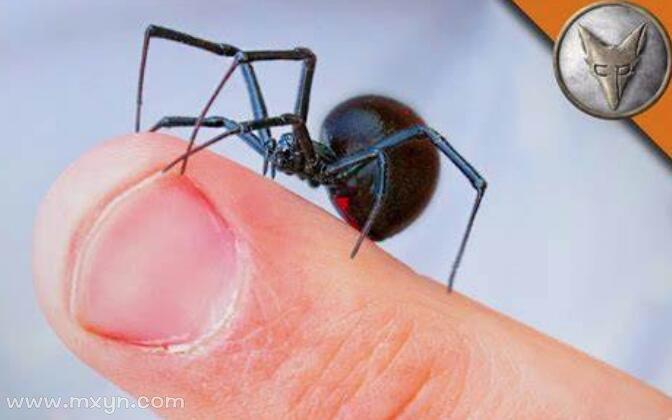 梦见被蜘蛛咬