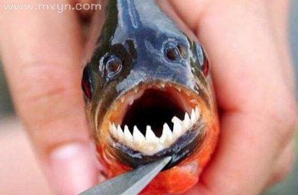 梦见被鱼咬