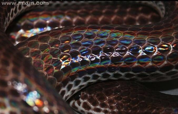 梦见彩色的蛇