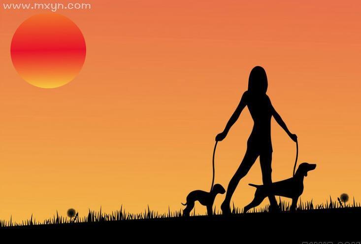孕妇梦见大黑狗