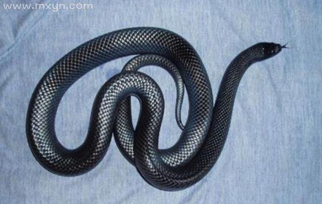 孕妇梦见黑色的蛇