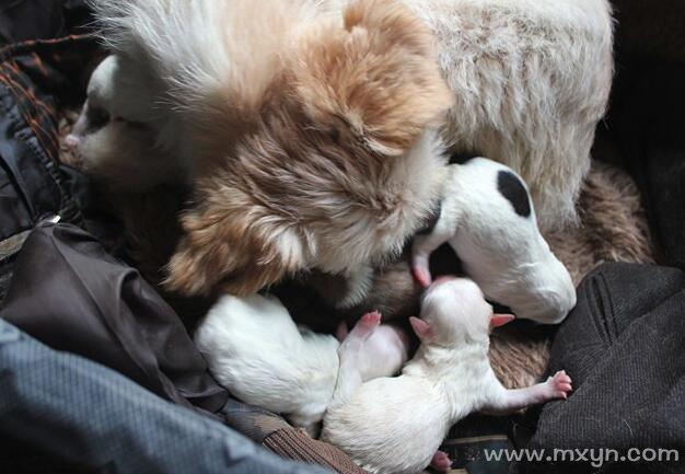 梦见狗生了好多小狗