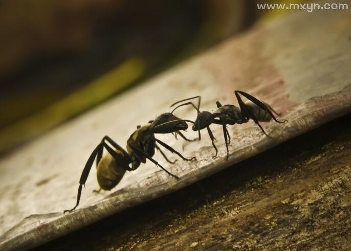 女人梦见蚂蚁爬上身