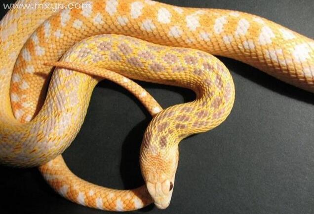 怀孕梦见蛇