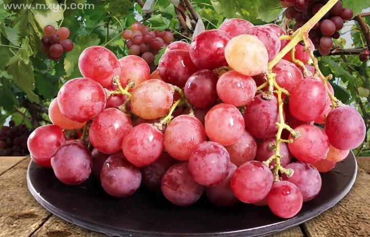 已婚女人梦见摘葡萄