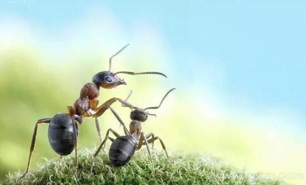 梦见蚂蚁爬上身