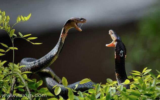 孕妇梦见到处都是蛇