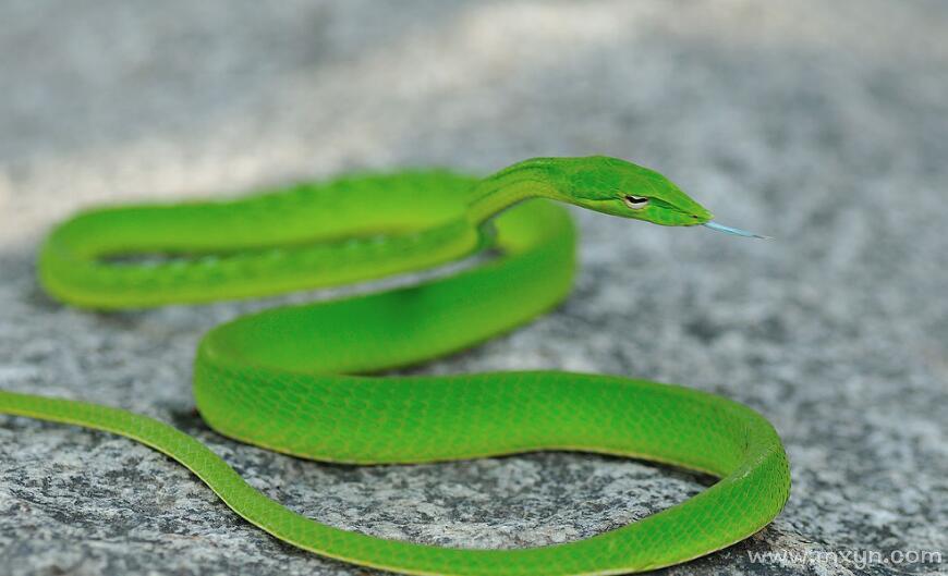 已婚女人梦见绿蛇