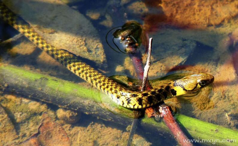 梦见水里好多蛇