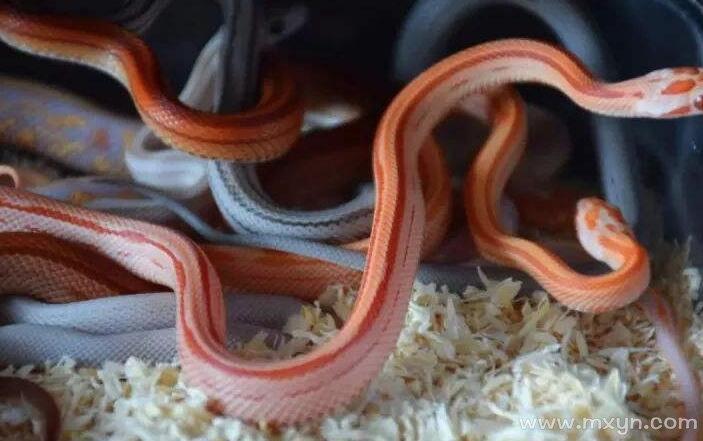 女人梦见几条蛇