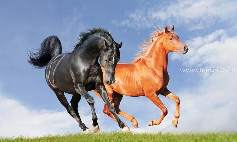梦见骑马奔跑