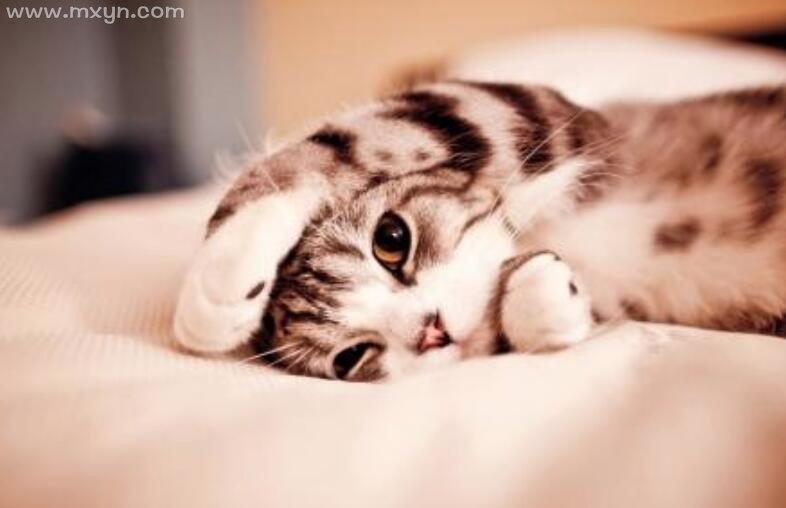 梦见被猫咬住不放