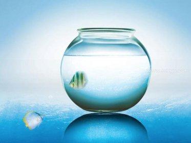 梦见水和鱼