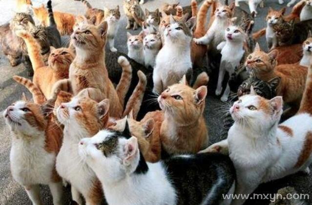 女人梦见一群猫