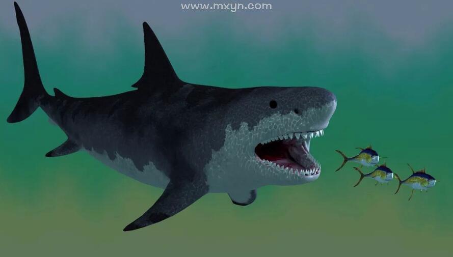 梦见大鱼吃小鱼