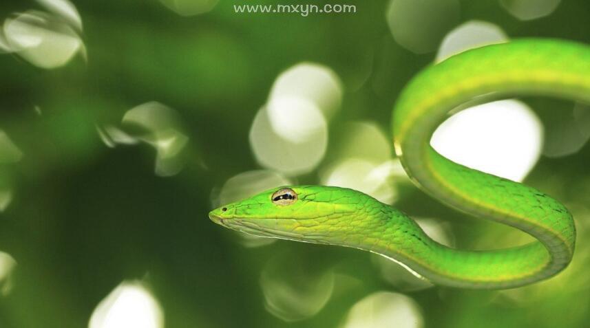 已婚男人梦见蛇