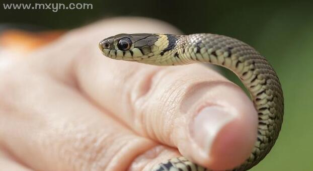 梦见蛇钻进自己的身体