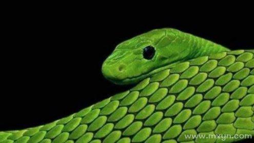 已婚女人梦见被蛇追