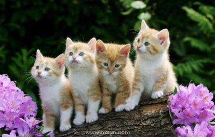 梦见一群猫