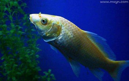已婚女人梦见鱼和水